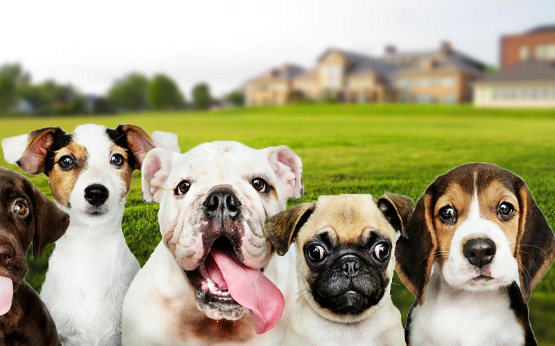 Popular pets in the world