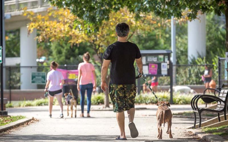 Why pets should be allowed in public places?