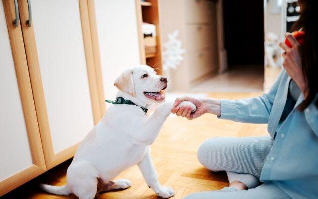 Why pets teach