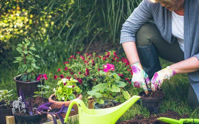 Is gardening becoming more popular 2021?