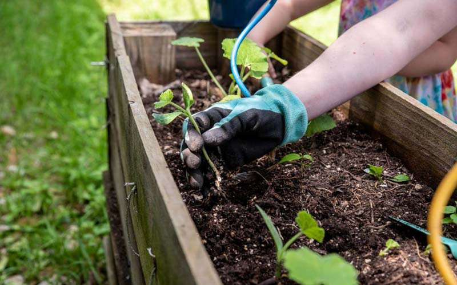 Gardening in Covid-19