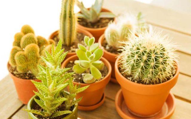 Xerophytes plants